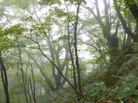 f:id:akagi39:20101225184205j:image