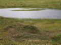 池塘(ちとう)とヒメシャクナゲ