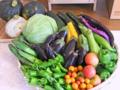 黒岩早人さんの野菜