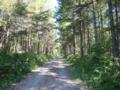 カラマツの植林地の林道