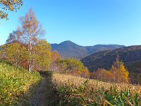 午後の登山道