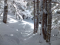 黒斑山針葉樹の森