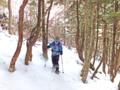 鬱蒼とした針葉樹林