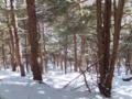 針葉樹林の中