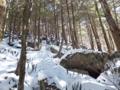 岩と針葉樹