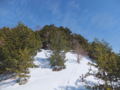 山頂の針葉樹林