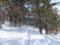 逢ノ峰の森