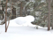 スフィンクスのような雪冠