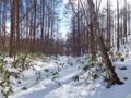 林道跡に戻る