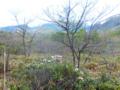 武具脱の池のシャクナゲ