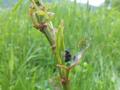 アブラムシと蟻とテントウ虫