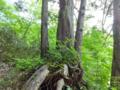 天然の盆栽