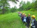 カラマツ母樹林と草原