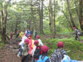 亜高山帯針葉樹林