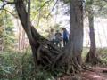 かたらいの森コメツガ