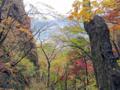 紅葉の谷へ