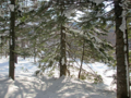 針葉樹林を通る