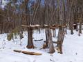 森林環境教育実施場所