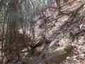 荒れた林道