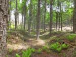 カラマツの植林