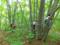 森のジャングルジム