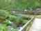 鹿沢園地で森林浴