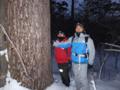 カラマツ巨木