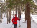 朝日山針葉樹林