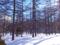 カラマツ母樹林