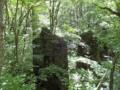 軽井沢で森林浴セラピー