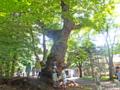 朝の軽井沢周辺散歩