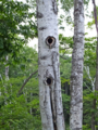 バラギ湖で自然観察