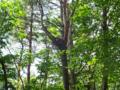 バラギ湖の自然観察
