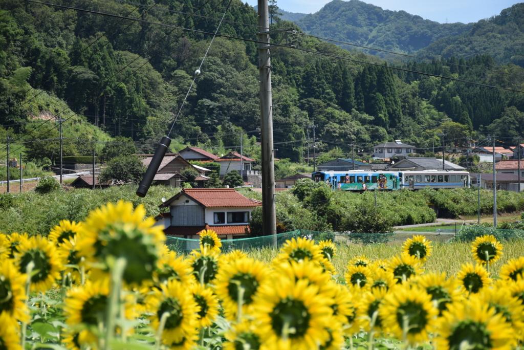 JR三江線沢谷駅付近のひまわりtags[島根県]