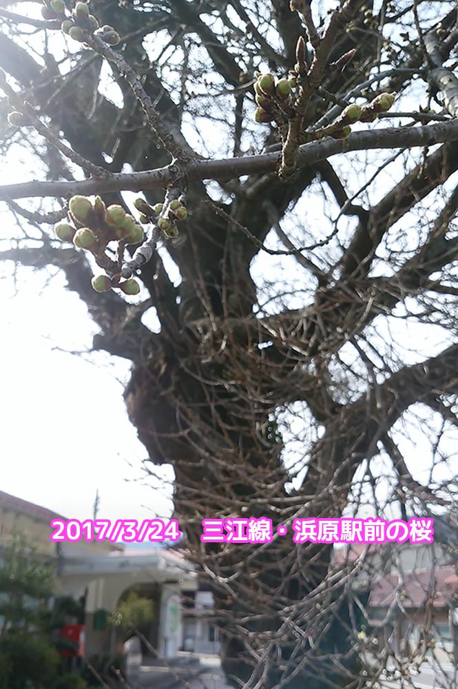 f:id:akai-chu-rip:20170324101635j:plain