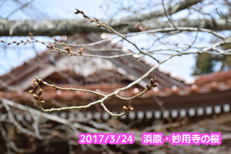f:id:akai-chu-rip:20170324111410j:plain