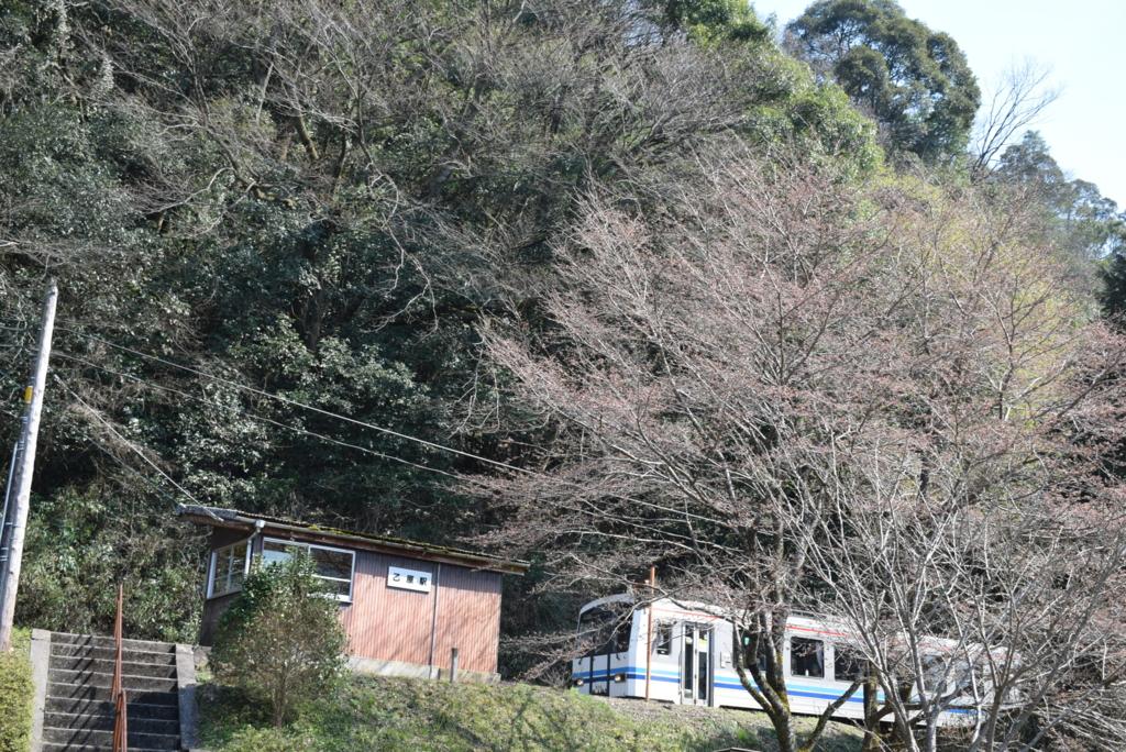 「桜と三江線」撮影ポイント予習編(乙原駅~沢谷駅)tags[島根県]