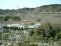 春秋恒例『鎌倉霊園』の草取りに行きました