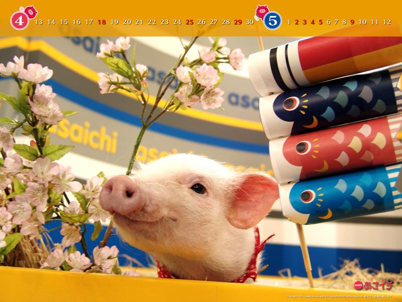 f:id:akaibara:20100413220839j:image:w200
