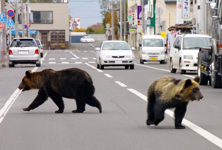 f:id:akaibara:20101018231935j:image