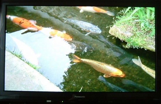f:id:akaibara:20120916174814j:image:w250