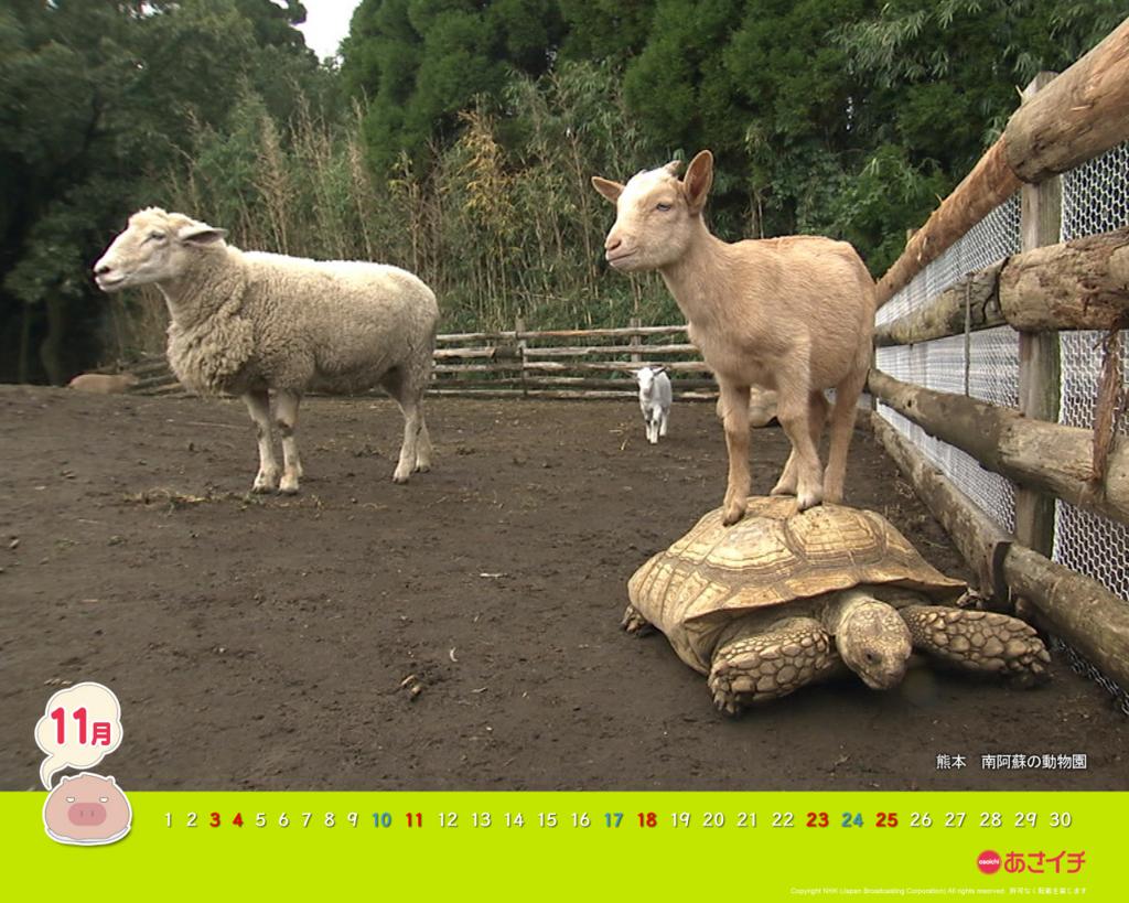 f:id:akaibara:20121026175500j:image:w500