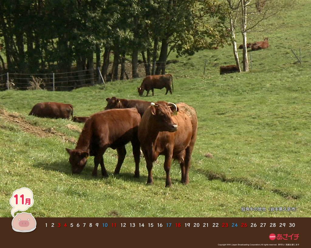 f:id:akaibara:20121107210901j:image:w500