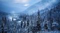 キナイ半島初冬の雪降る針葉樹の森