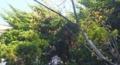 庭のさんしゅの木
