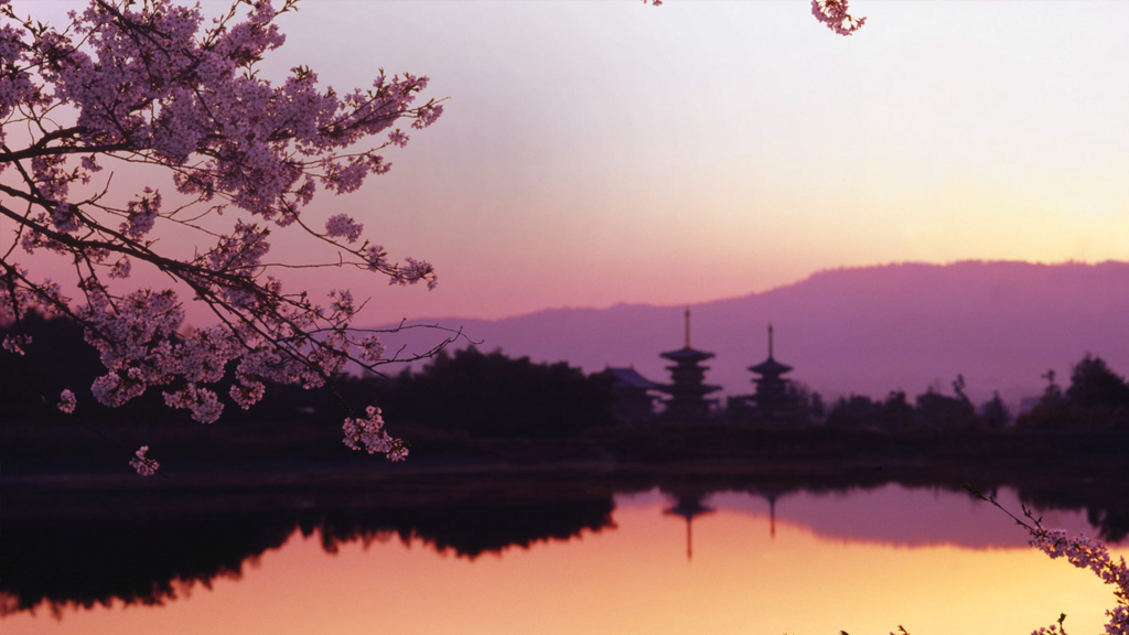 西の京大池と薬師寺桜に染まる ...