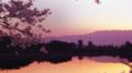 西の京大池と薬師寺桜に染まる古都の夕暮れ