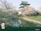 桜満開の松前城