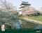 桜満開の松前城1024