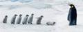 「コウテイペンギンの学校」南極, スノー・ヒル島.